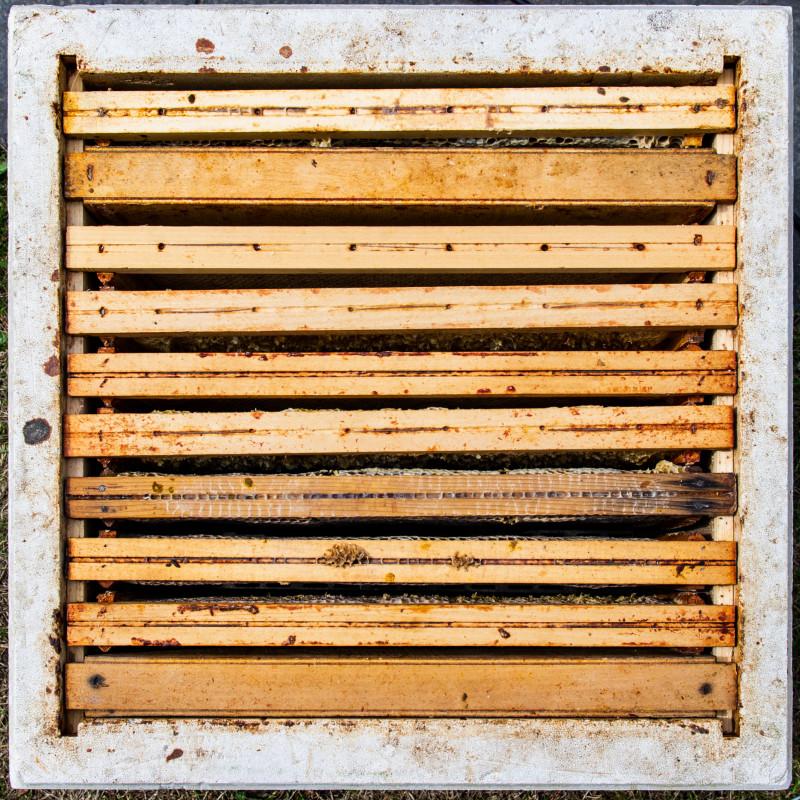 Foredrag om biehold i Villa Walle hagen